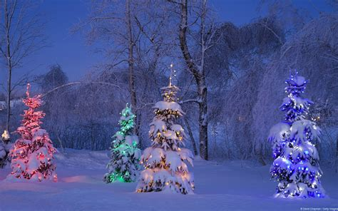 animated christmas trees with snow wallpapers lighted trees in winter forest hd wallpaper background image 1920x1200 id 775753