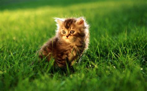 cute cats  pets cute  docile