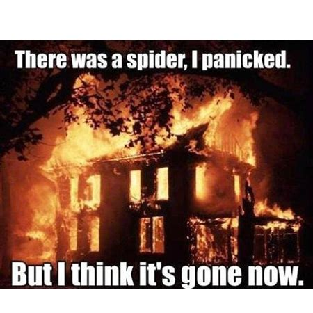 kill spiders in house man burns down house trying to kill spider with spray paint and lighter