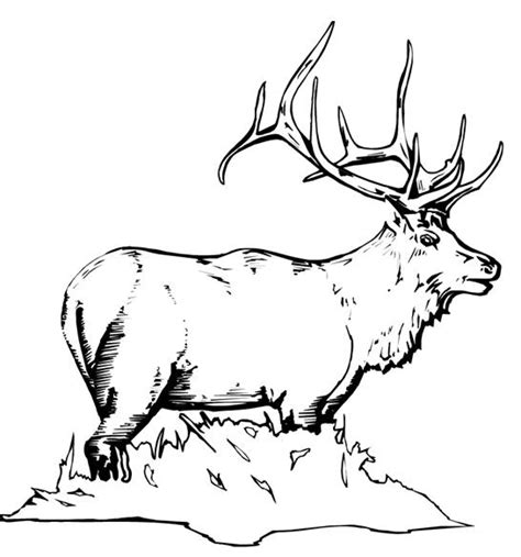 free animal coloring pages elk thru mouse