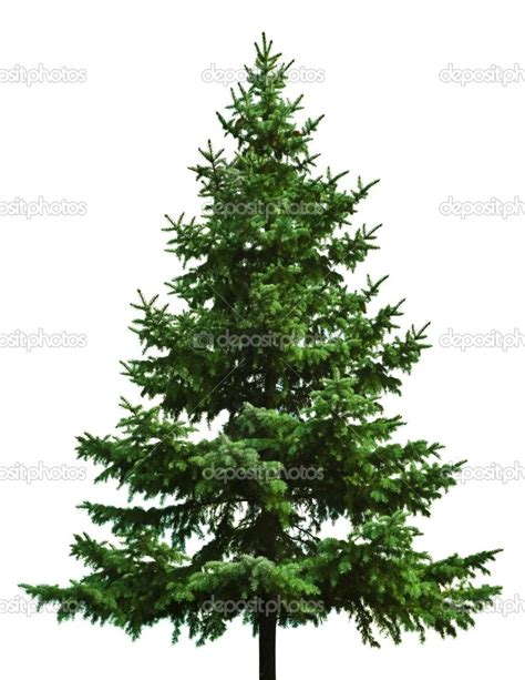 christmas tree types comparison there can be a big difference between different types of trees some are not available