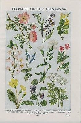 libro botanical sketchbook inspiration and 17 best images about a field guide quilts for all seasons book 3 on nature journal