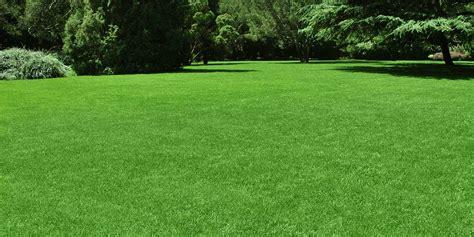 diy tips   happy healthy lawn heybryan trusted