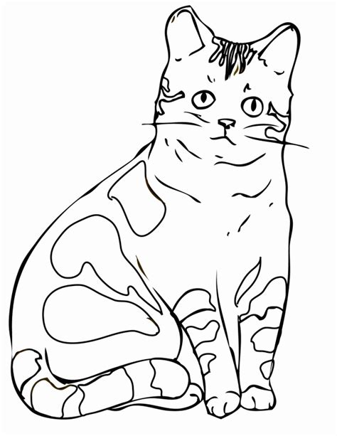 coloring pages of real cats realistic cat coloring pages az coloring pages