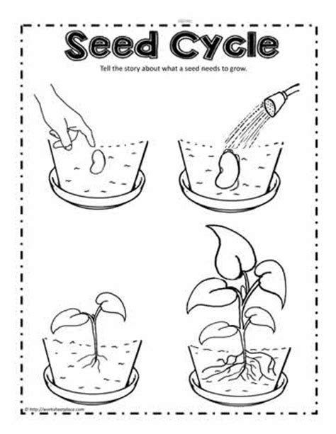 Seed Worksheets For Kindergarten by Plant Seed Cycle Worksheets