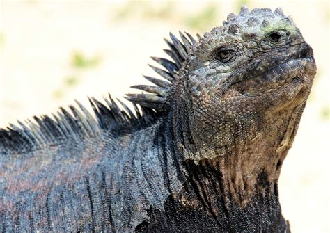 galapagos islands animals the animals of the galapagos islands fun animals wiki