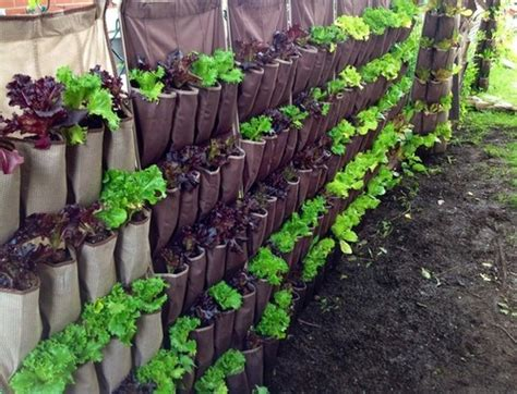 fence planters thatll   loving  privacy