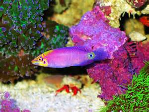 pictures of colorful fish animals of planet earth animalitos