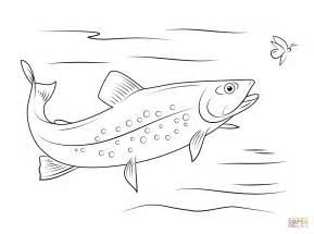 Brook Trout Coloring Page brook trout coloring page free printable coloring pages