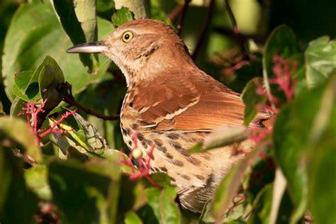 birds in my backyard 1000 images about birds in my backyard on pinterest