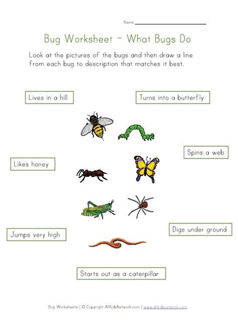kids bug and insects worksheets learn about bugs worksheet for kids busy bags and