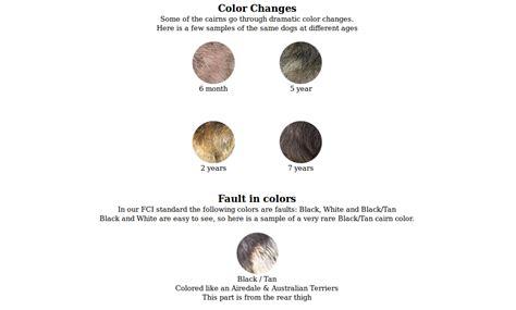 terrier colors cairn terrier coat colors 171 divinity