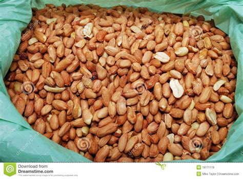 peanuts wild bird food royalty free stock images