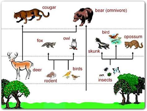 animal food chain diagram 6ahaverfordgarden11 food chain