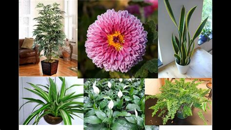top   air filtering house plants youtube