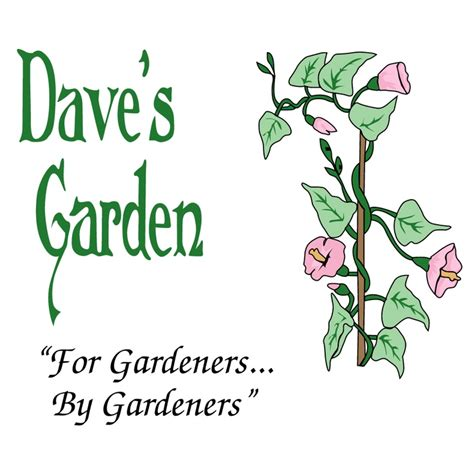 Garden Plants Catalogs by Pin By Theresa Bowes On Garden Seed Catalogs