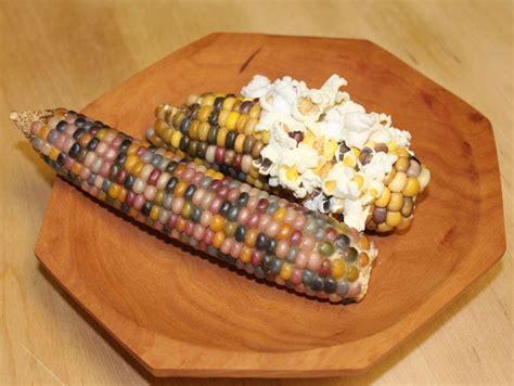 Bibit Jagung Popcorn bibit bunga benih jagung permata glass gem corn lazada indonesia
