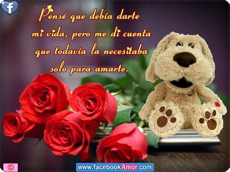 bonitas de rosas rojas con frases de amor imagenes de amor facebook imagenes de rosa rojas con frase de amor im 225 genes