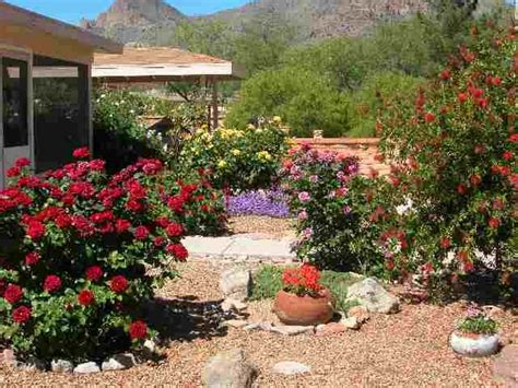 Gardening In Arizona 17 Best Ideas About Arizona Gardening On