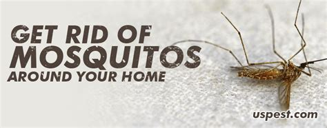 mosquitoes get rid of mosquitoes around your home us