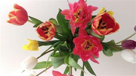gambar menanam daun bunga bunga tulp flora bunga