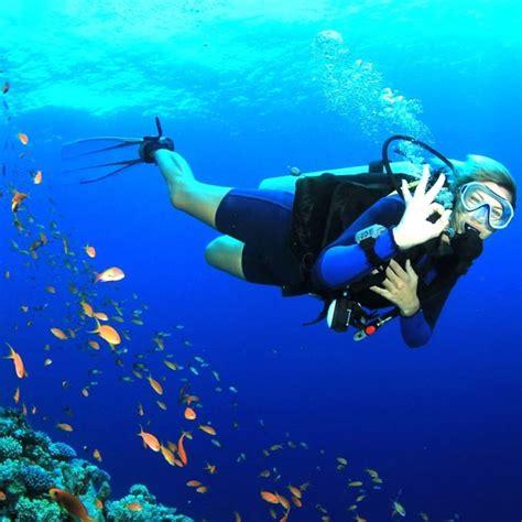 padi dive padi open water diver