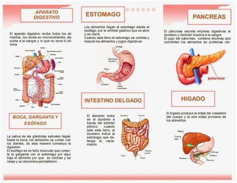 digestivo images aparato que funcion cumple el sistema picture que funci 243 n cumple el sistema digestivo que funcion cumple