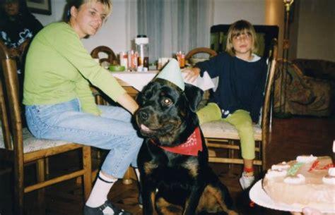 rottweilers and children vom steintor rott rottweilers and uzgajivačnica