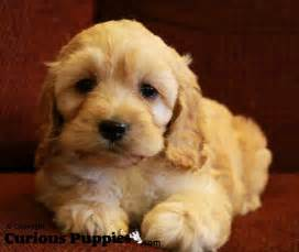 Puppies For Sale Puppies For Sale Puppies For Sale Dogs For Sale In