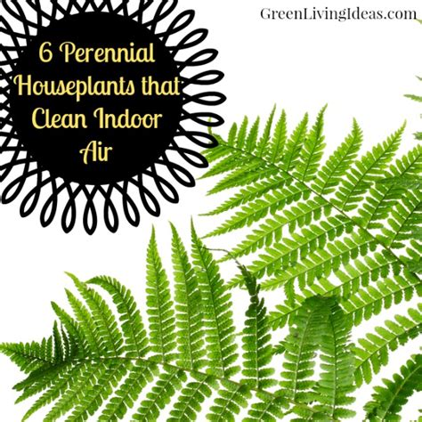 indoor plants to clean air perennial houseplants that clean indoor air
