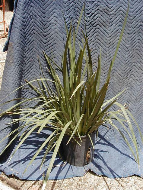 southwest plants