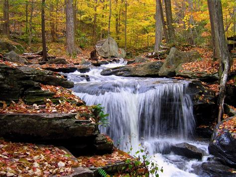 forest waterfall  autumn rocks fallen dry leaves hd