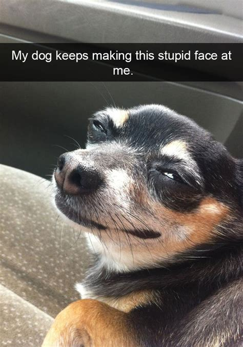 Funny Dog Face Meme - 15 hilarious dog snapchats that are impawsible not to