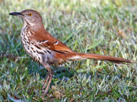 list of birds of georgia u s state wikipedia
