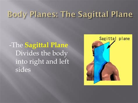 A Section That Divides The Into Left And Right by Planes Directions Cavities And Regional