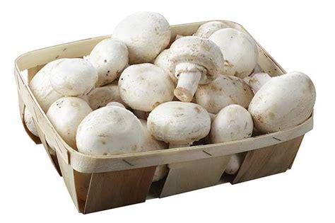 coltivare funghi in casa coltivare funghi in casa in cassetta in sacco e nel legno