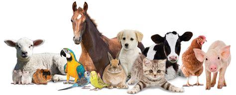 een dierenspeciaalzaak met een u paard benodigdheden koenis bv