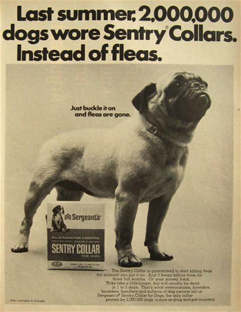 pug ad 1967 sentry flea collar ad pug photo vintage ads with animals