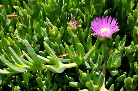 piante grasse da appartamento nomi piante grasse da appartamento nomi duylinh for