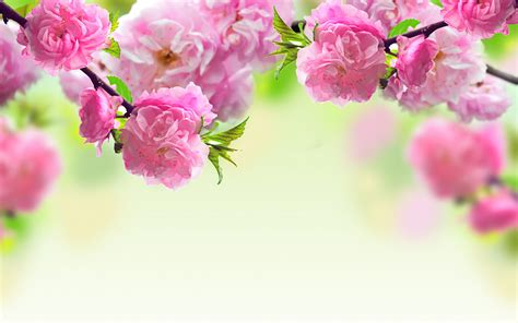 Floral Pink 169 flower backgrounds wallpapers pictures images design trends