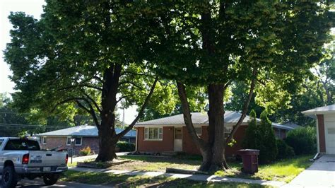 service lincoln ne omaha tree removal service