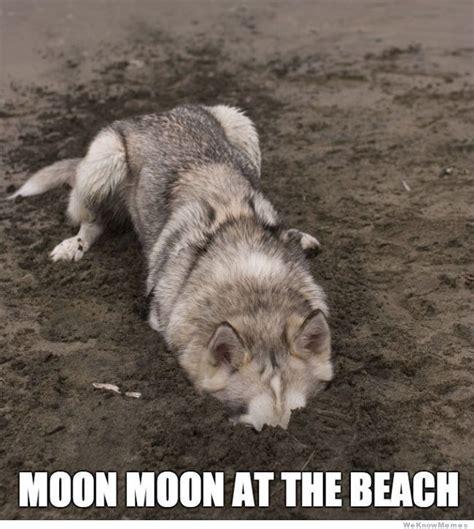Moon Meme - moon moon ii naruto discussion forum
