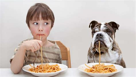 best human food for dogs for human food dogs onedaytop