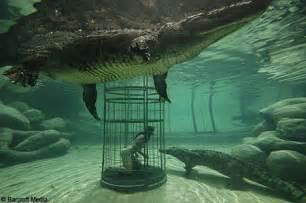 Jaguar Grabs Crocodile Anaconda Vs Crocodile