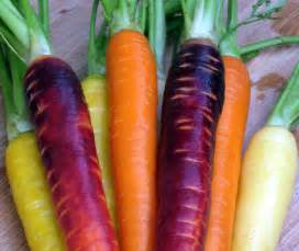 original color of carrots how to grow carrots the gardenplanner
