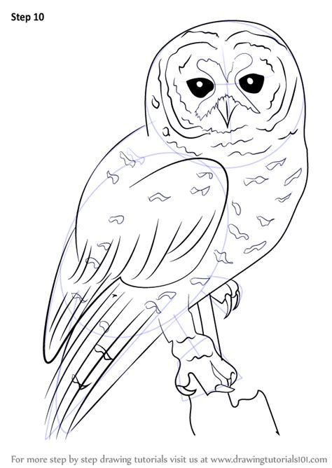 how to draw an owl learn to draw a cute colorful owl in learn how to draw a spotted owl owls step by step