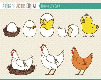 life cycle of a chicken photo cut out chick life cycle clipart