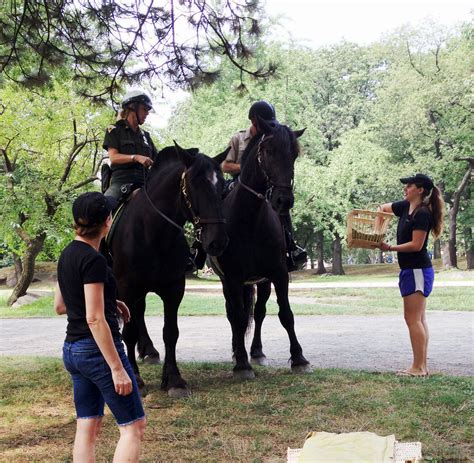 Horse Giveaways - encore performance of apple giveaway in central park manhattan fruitier