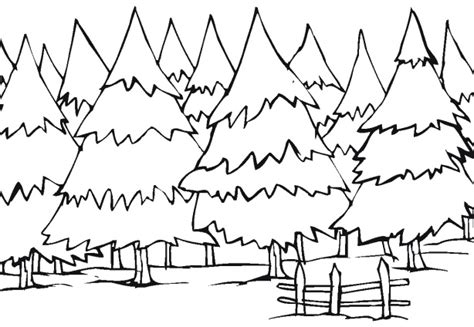 coloring pages of winter trees winter tree coloring coloring pages