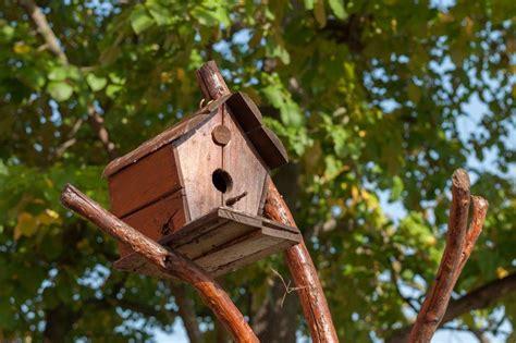 build wren bird house birdcage design ideas